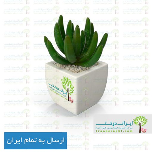 potted-succulent-plant-Wy1y78B-6001